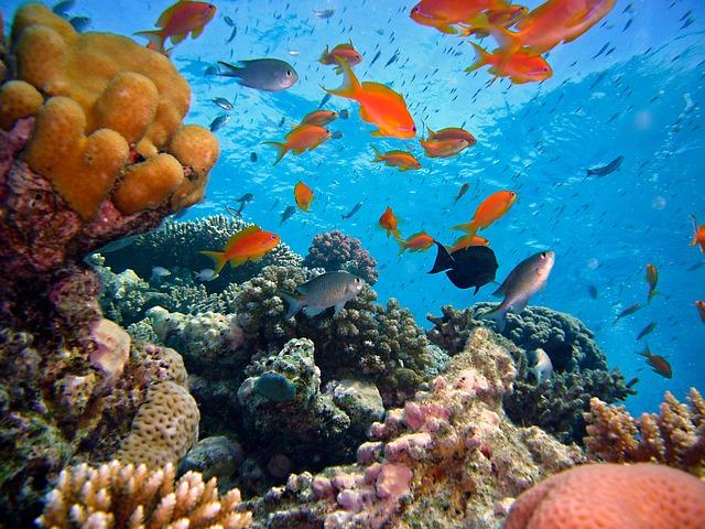 rybky útesu