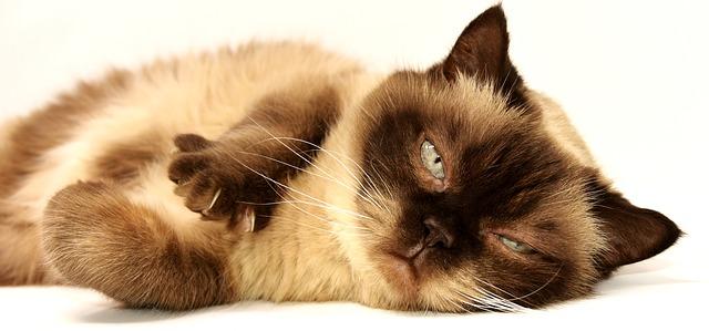 kočka domácí.jpg